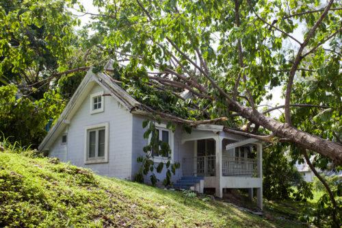 restoration-fallen-tree