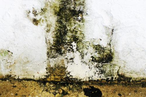 restoration-mold-wall