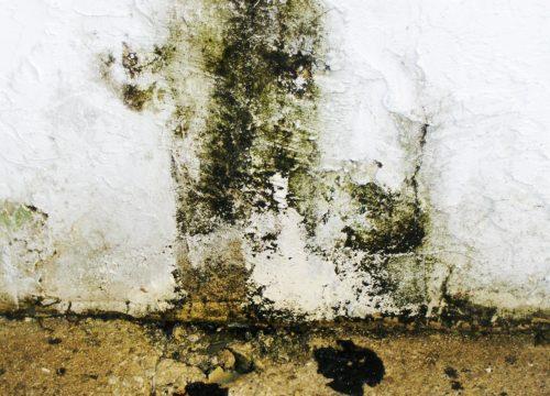 restoration-mold